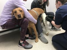 Let's Talk About Casting Dog Braces, Let Them Talk, Let It Be, Dog Leg, Upcoming Events, Your Dog, It Cast, Pets, Blog