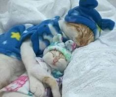 Sleepy little kitties...