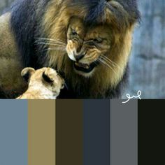 Zoo lion meets cub for first time color palette