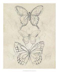 Vintage Butterfly Sketch II Giclee Print by June Erica Vess … – Drawing Ideas Sketchbook Drawings, Pencil Art Drawings, Drawing Sketches, Drawing Ideas, Sketchbook Ideas, Tattoo Drawings, Sketch Ideas, Cool Sketches, Animal Sketches Easy