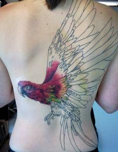 arara | parrot