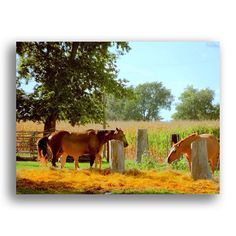 Winnebago Corners Horse Ranch