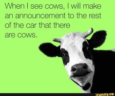 "Lol I do this, then we roll down the windows and yell, ""Hi, cows!""    They look up EVERY time!"