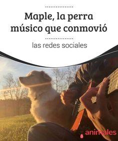 Maple, la perra músico que conmovió las redes sociales  Bien sabido es lo inteligentes y hábiles que son nuestros queridos peludos. Pero la verdad es que nunca dejan de sorprendernos. Y menos ahora, que contamos con las redes sociales para enterarnos rápidamente de todo y ver cómo ganan en fama estas mascotas.