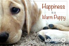 ~*HAPPINESS IS A PUPPY/DOGGIE*~          ~*To Warm Your Heart*~