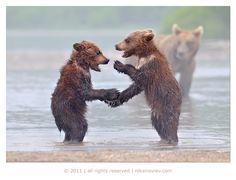 Hilarious and Heartwarming Photos of Animals as Friends - My Modern Metropolis