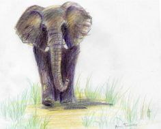 Elephant by MistyCascade on DeviantArt