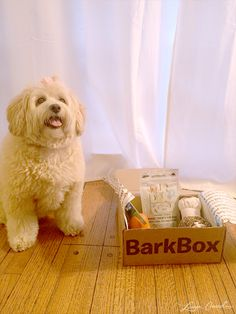 Holiday Gift Idea for Dog Lovers