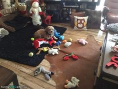 Toby And Friends http://www.funnydogsite.com/pictures/Toby_And_Friends.htm?utm_source=rss&utm_medium=Sendible&utm_campaign=RSS