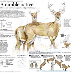 Illustrations and infographics created for the Chicago Tribune