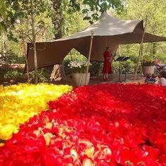One of the many concerts at the festival I program at the Keukenhof  Femke IJlstra #saxophone #music #classicalmusic #concert #flowers #park #Keukenhof #colors #sunny #sunnyHolland #sunnyday #warmestdayoftheyear #reddress #red #yellow by pianist_celia