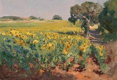 Sunflowers in field Kevin Macphearson
