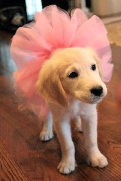 Ballerina Pup... how come I can picture Sophia dressing up Gingerbread just like this!!!