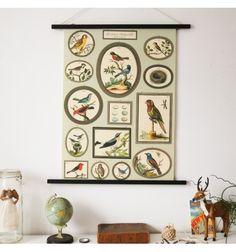 Histoire naturelle collection oiseaux II