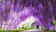 Οι μαγευτικοί κρεμαστοί κήποι της Ιαπωνίας! - Προπαγάνδα
