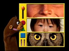 Baby Einstein Videos, Creature Movie, Elementary Spanish, Cute Animal Illustration, Kids Education, Human Body, Youtube, Preschool, Cute Animals