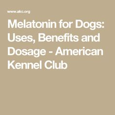 Melatonin for Dogs: Uses, Benefits and Dosage - American Kennel Club