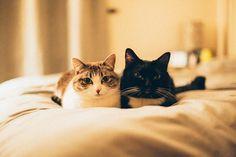Public Service Announcement: every day is national cat day. Love Opie and Zelda #opiewearstuxedos #zeldathemunch #nationalcatday by opieandzelda