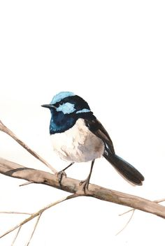 Fairy Wren Bird Art Archival print of watercolor by LouiseDeMasi
