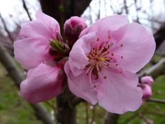Quelques fleurs de pêchers pour illuminer le mois de mai en rose (#lundisoleil 19) - Dans la Bulle de Manou