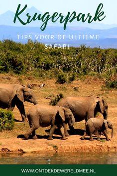 12 tips voor de ultieme Kruger safari Kruger National Park, Self Driving, Africa Travel, Travel Photographer, Worlds Of Fun, Wildlife Photography, South Africa, Road Trip, Elephant