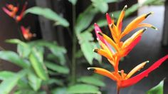 Amenazado el paraíso brasileño donde viven un tercio de las abejas tropicales