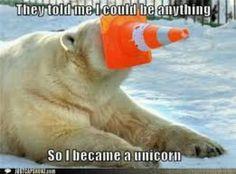 Lol polor bear unicorn