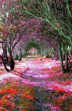 tree tunnel sena de luna spain A Magical Tree Tunnel In Sena de Luna, Spain Beautiful World, Beautiful Places, Beautiful Pictures, Beautiful Forest, Trees Beautiful, Amazing Flowers, Tree Tunnel, Magical Tree, Magical Forest