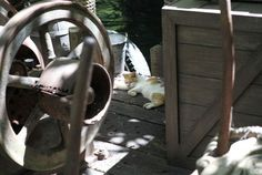 The Feral Cats Who Call Disneyland Home - Neatorama