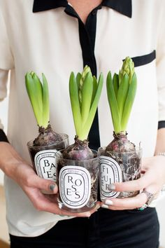 Repurposing glass jars for dishware, planters, holders, and more has become the new normal. It's a great (and green) way to add style to your space. Use these tips to remove labels so that your glass can really shine. Reuse Candle Jars, Glass Candle, Glass Jars, Mason Jars, Candle Containers, Spring Flowering Bulbs, Spring Bulbs, Pots, Old Candles