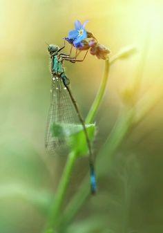 Morning Impression With Blue Dragonfly Photograph by Jaroslaw Blaminsky