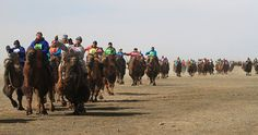 Thousands take part in largest camel race as part of initiative to increase animal's population in Mongolia: http://www.guinnessworldrecords.com/news/2016/3/thousands-take-part-in-largest-camel-race-as-part-of-initiative-to-increase-anima-420925 #Travel #Stories #Record