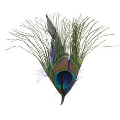 Peacock Natural Feather Pick with Loop