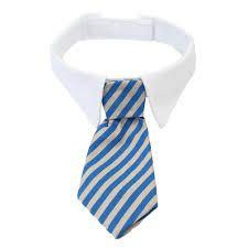 Resultado de imagem para modelo de gravata para gato