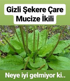 Medicinal Plants, Health Advice, Natural Medicine, Diabetes, Herbalism, Plant Leaves, The Cure, Herbs, Nature