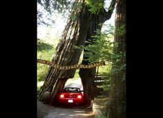 Avenue of the Giants from The 6 Most Incredible California Road Trips (PHOTOS)