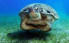 disapproving sea turtle disapproves