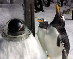 Check out our Penguin Cam!