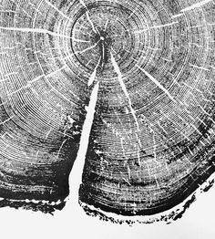 Uinta Pine Tree Print by LintonArt on Scoutmob