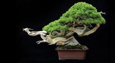 Bonsai: significato e tradizione del paesaggio in miniatura