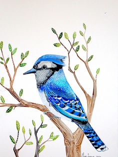 Exceptional Blue Jay Watercolor Painting By Sublimecolors