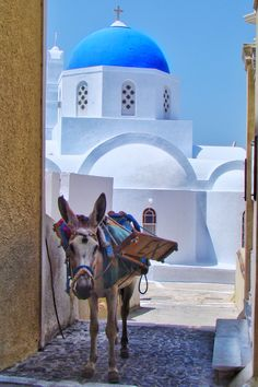 Little Mule in Pyrgos, Santorini