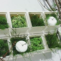 Terrarium, Garden, Plants, Home Decor, Terrariums, Garten, Decoration Home, Room Decor, Gardens