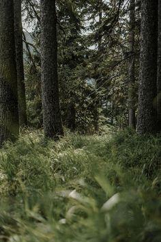 Die Ruhe in der Natur am Katschberg Trunks, Plants, Summer Vacations, Ski, Woods, Nature, Drift Wood, Flora, Plant