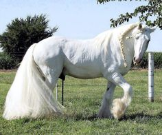 25 Majestic and Beautiful Horse Pictures