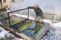 You can grow anything in your Coldframe that you would normally grow in your garden. In many areas, you can sow seeds for spinach, lettuce, kale, choys, and other salad greens in fall to enjoy in winter. Or, transplant heads of lettuce, cabbage, and cauliflower inside the frame.