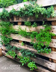 Five great ideas for vertical food gardening.