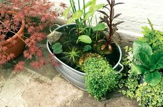Create an attractive mini-pond, perfect for small gardens or balconies, using our easy practical guide, from the experts at BBC Gardeners' World Magazine.