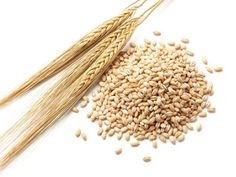 Health benefits of barley include reduced risk of asthma arthritis impotence skin problems anemia obesity constipation diabetes and hypertension. Barley Health Benefits, Barley Nutrition, Coffee Nutrition, Barley Soup, Barley Grain, Water Retention Remedies, Coffee Substitute, Substitute Recipe, Vegetarian