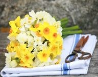 Pinterest / Search results for wedding flowers narcissi